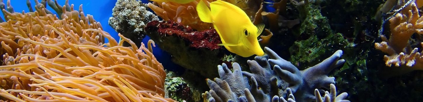 With Bonelli Bus you can enjoy the splendid Aquarium in Cattolica!